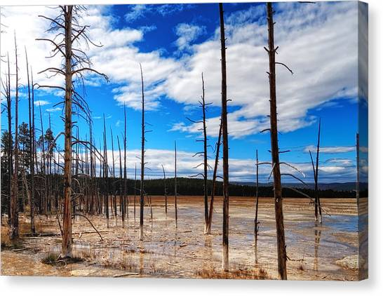 Canvas Print featuring the photograph Trees In The Midway Geyser Basin by Lars Lentz