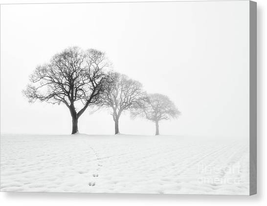 Trees In Snow Canvas Print - Trees In The Mist by Janet Burdon