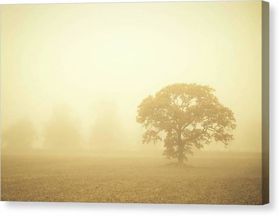 Canvas Print - Trees In The Mist by Richard Nixon