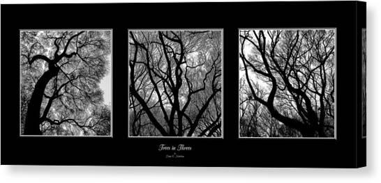 Trees In Threes Canvas Print by Diane C Nicholson