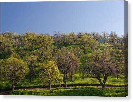 Trees On Hillside Canvas Print