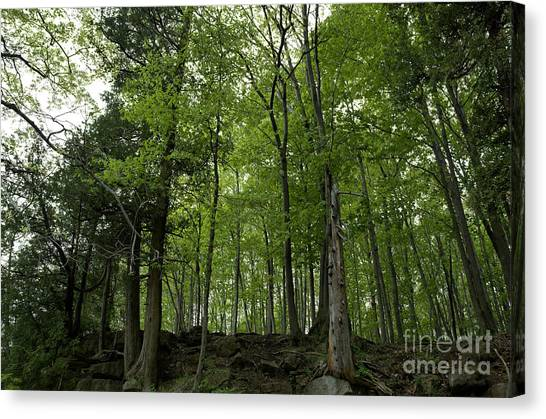 Trees On The Edge Canvas Print