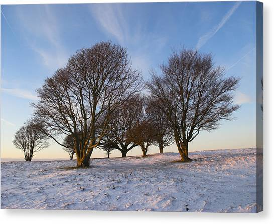 Trees On The Ring Canvas Print