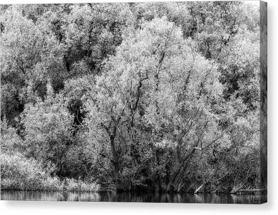 Trees On The River Canvas Print