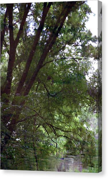 Trees Reflected In A Woodland Stream 2867 H_2 Canvas Print