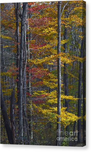 Trees With Autumn Colors 8260c Canvas Print