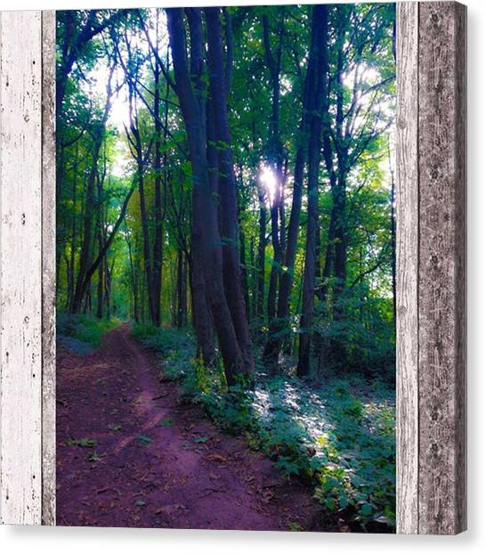 Foxes Canvas Print - #trees #woods #woodland #path #sunlight by Sam Stratton