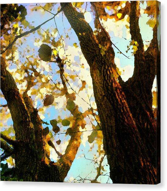 Canvas Print featuring the digital art Treetop Abstract-look Up A Tree by Shelli Fitzpatrick