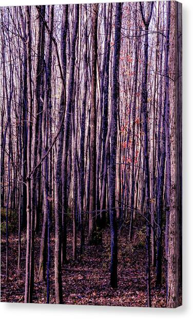 Treez Magenta Canvas Print