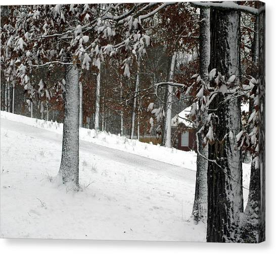 Tress Of Snow Canvas Print by Lynn Reid