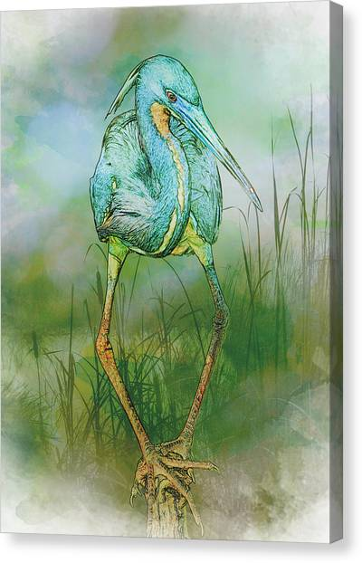Canvas Print featuring the photograph Tri-colored Heron Balancing Act - Colorized by Patti Deters