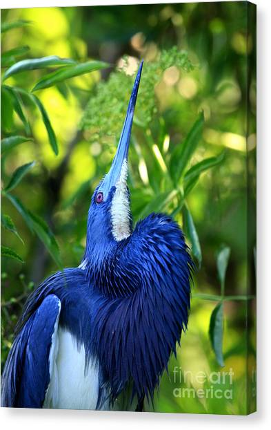 Tri-colored Heron Head Throw Canvas Print