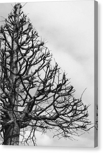 Triangles Canvas Print - Triangle Tree by Linda Woods
