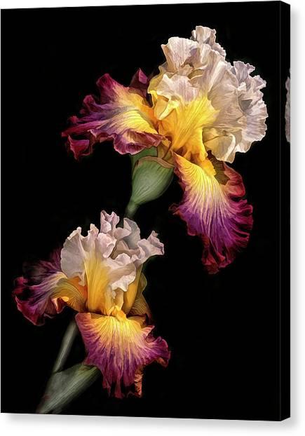 Tricolor Iris Pair Canvas Print