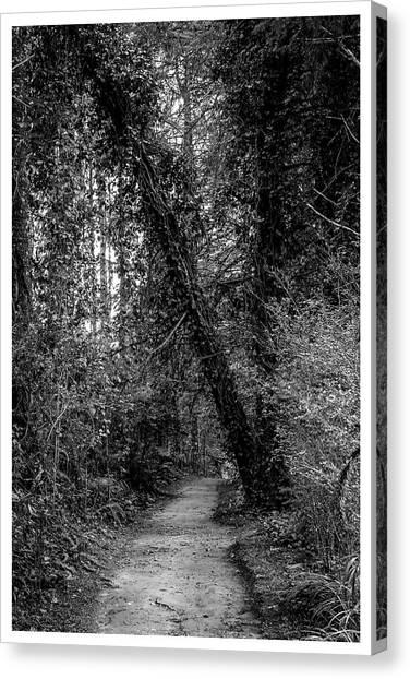Trilha--bosque Do Silencio-campos Do Jordao-sp Canvas Print