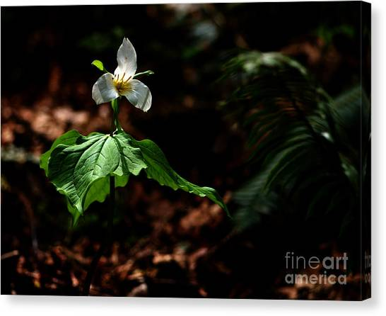 Trillium In The Woods Canvas Print by Sharon Talson