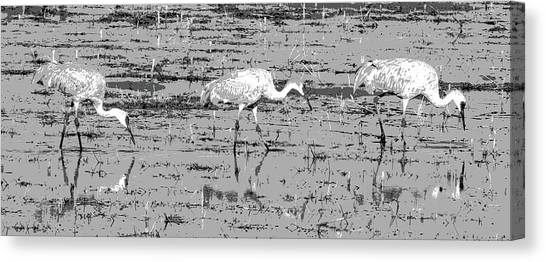 Trio Of Cranes Canvas Print
