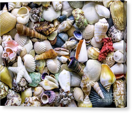 Tropical Beach Seashell Treasures 1500a Canvas Print