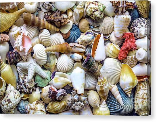 Tropical Beach Seashell Treasures 1529b Canvas Print