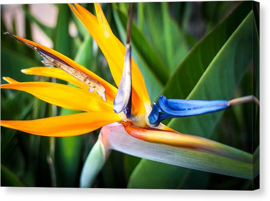 Canvas Print featuring the photograph Tropical Closeup by T Brian Jones
