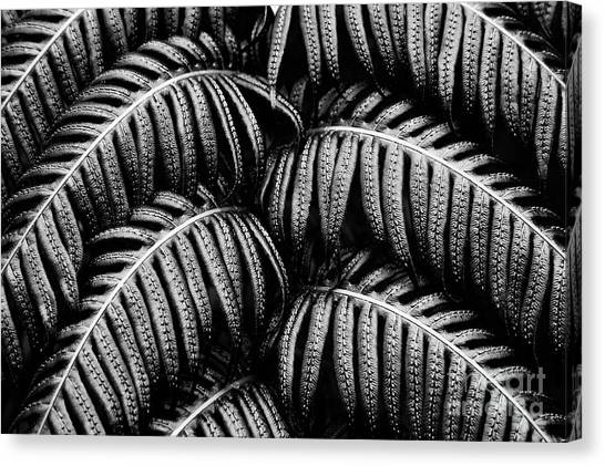 Tropical Fern Black White Canvas Print