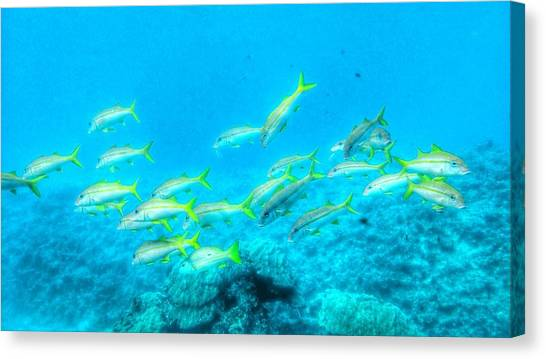 Tropical Fish Canvas Print - Tropical Fish by Tomoko Takigawa