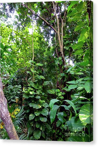 Canvas Print - Tropical Garden by Francesca Mackenney