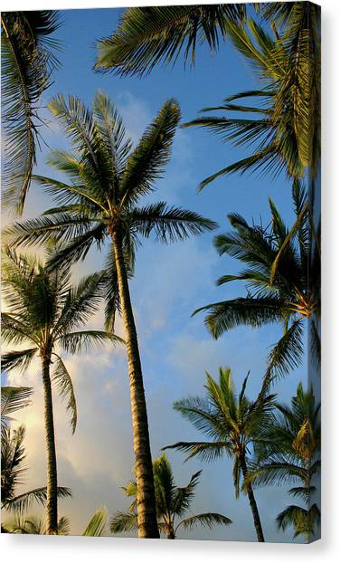 Tropical Palm Trees Of Maui Hawaii Canvas Print