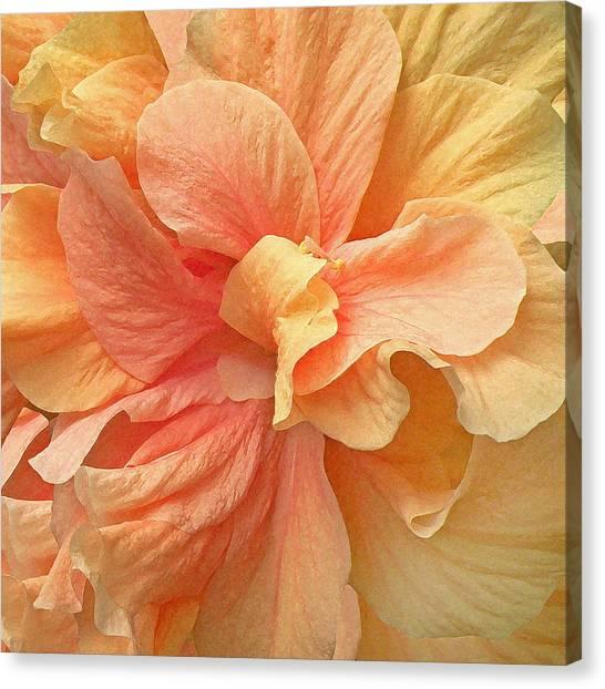 Tropical Peach Hibiscus Flower Canvas Print