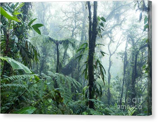 Monteverde Canvas Print - Tropical Rainforest - Monteverde Cloud Forest - Costa Rica by Matteo Colombo