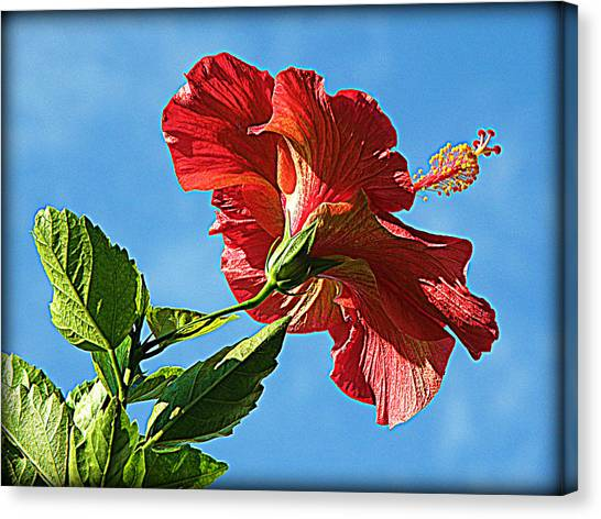 Tropical Red Hibiscus  Canvas Print