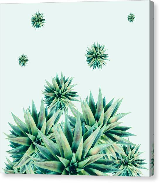 Succulent Canvas Print - Tropical Stars  by Mark Ashkenazi