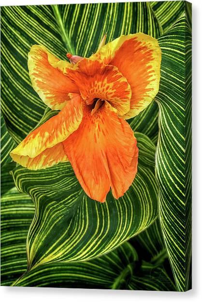 Tropicanna Beauty Canvas Print