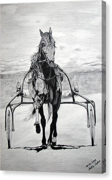Trotter Canvas Print
