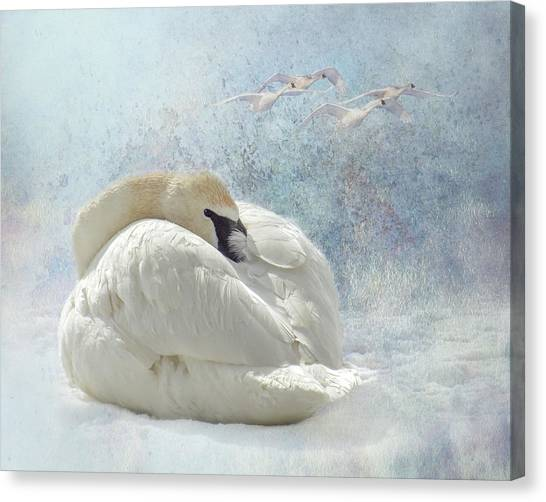 Trumpeter Textures #1 - Swan Feather Canvas Print
