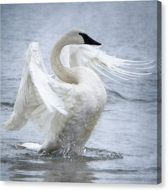 Canvas Print featuring the photograph Trumpeter Swan - Misty Display 2 by Patti Deters