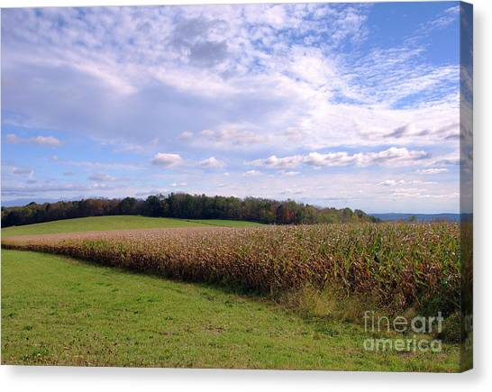 Trusting Harvest Canvas Print