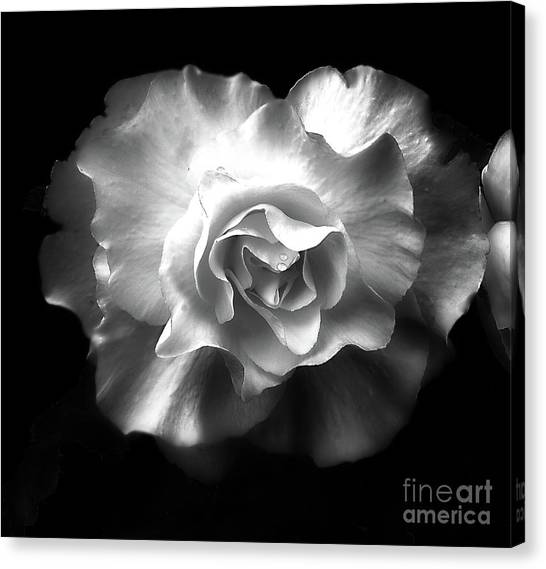 Canvas Print featuring the photograph Tuberous Begoonia by Ann Jacobson