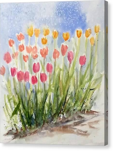 Tulip Abunda Canvas Print