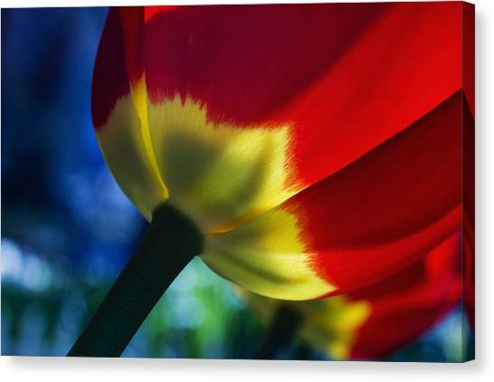 Tulip Expression Wide Canvas Print by Shawn Young