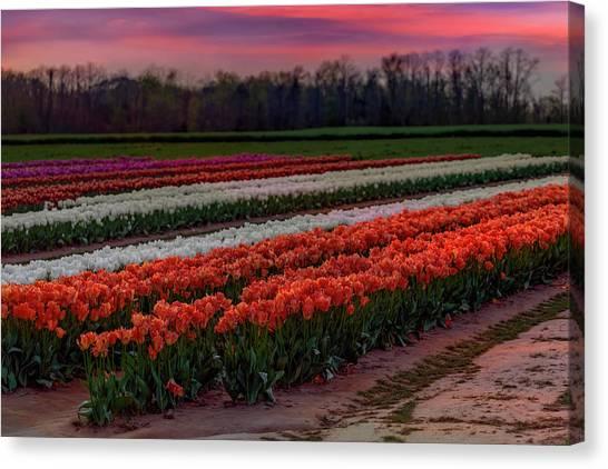 Canvas Print featuring the photograph Tulip Farm by Susan Candelario