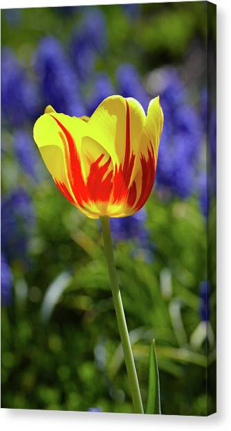 Tulip Flame Canvas Print