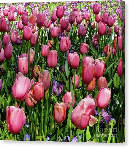 Canvas Print featuring the photograph Tulip Flowers  by D Davila