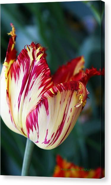 Tulip Fluff Canvas Print by KatagramStudios Photography