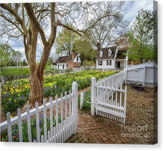 Tulip Garden Colonial Williamsburg  Canvas Print