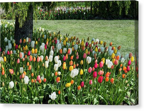 Skagit Valley Tulips Canvas Prints (Page #9 of 15) | Fine Art America
