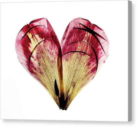 Heart Shape Canvas Print - Tulip Heart by Nailia Schwarz