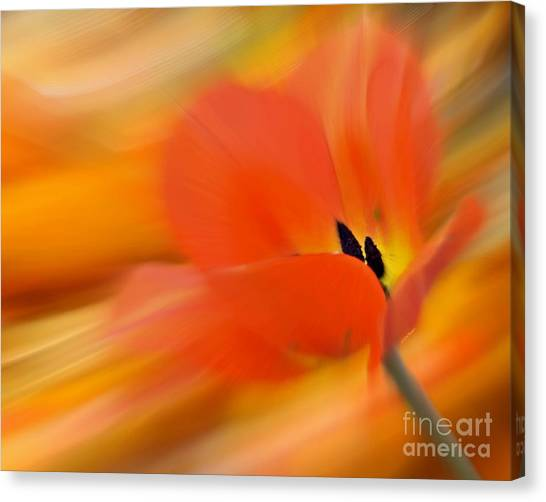 Tulip In Motion Canvas Print