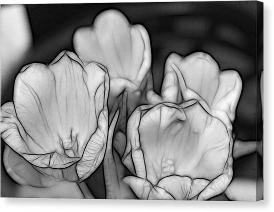 Tulip Line Study Canvas Print by Kevin  Sherf