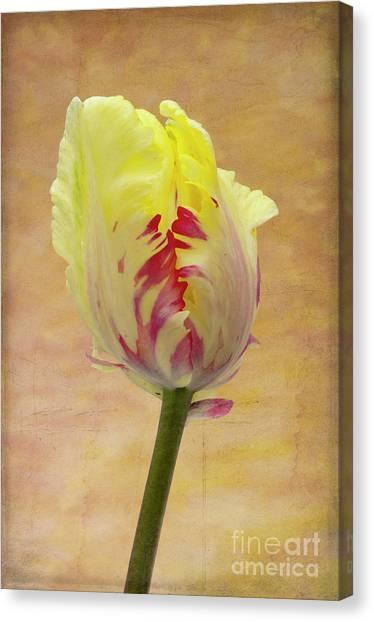 Spring Bulbs Canvas Print - Tulip by Marion Galt